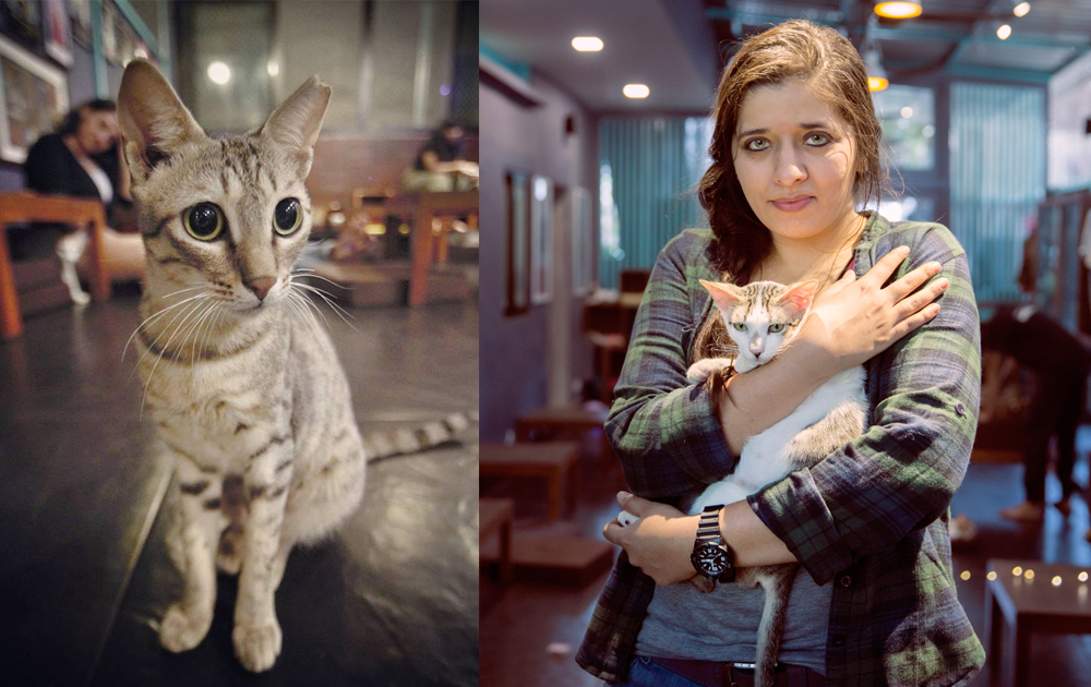 These Sisters Run a Cafe Where You Can Hang Around with Cool Cats, Literally