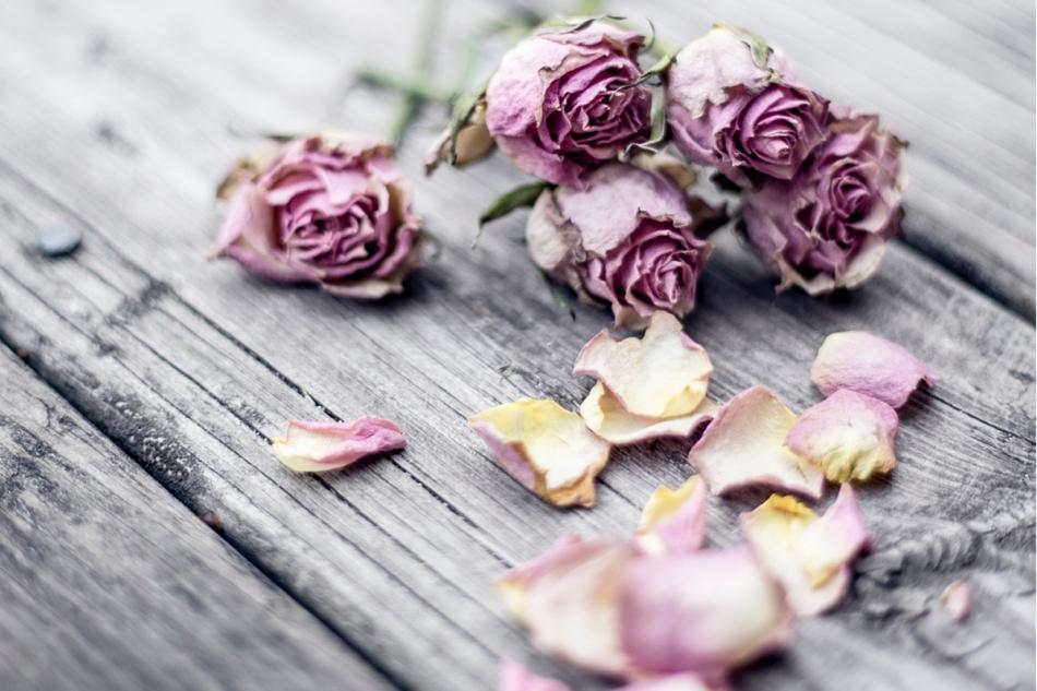 broken-petals