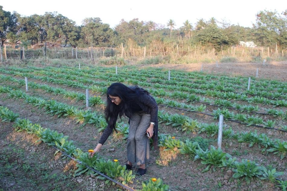 Shubhika in a calendula field.jpg