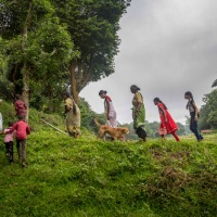 Her Films Document Indigenous People and Human-Animal Conflict in the Nilgiris